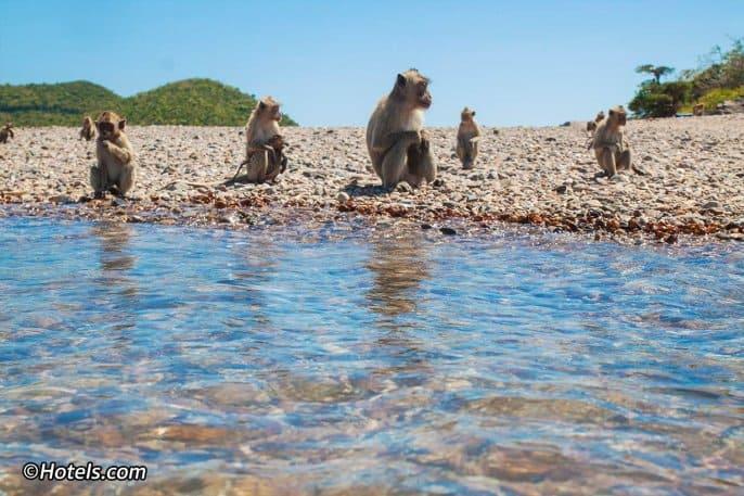Boat Trip to Monkey Island