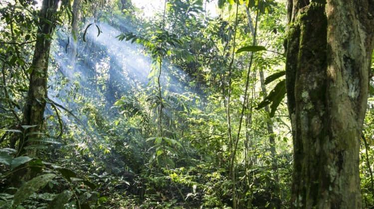 https://d3hne3c382ip58.cloudfront.net/resized/750x420/camino-verde-jungle-trek-tour-2-427832_1528875103.JPG